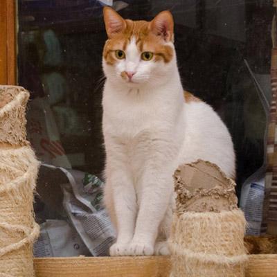 ANIMAL HOUSE HOSPITAL - ADOPTION ADOPTION PROCESS - CATS GALLERY