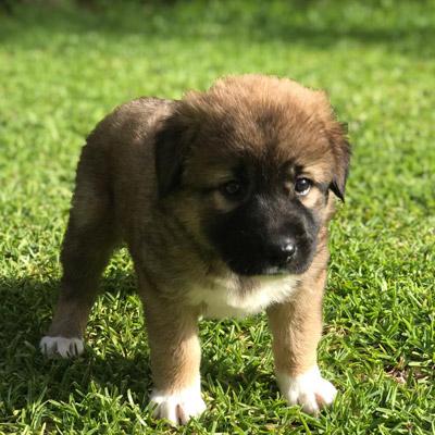 ANIMAL HOUSE HOSPITAL - ADOPTION ADOPTION PROCESS - DOGS GALLERY