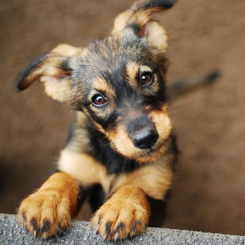 ANIMAL HOUSE HOSPITAL - ADOPTION - ADOPTION PROCESS