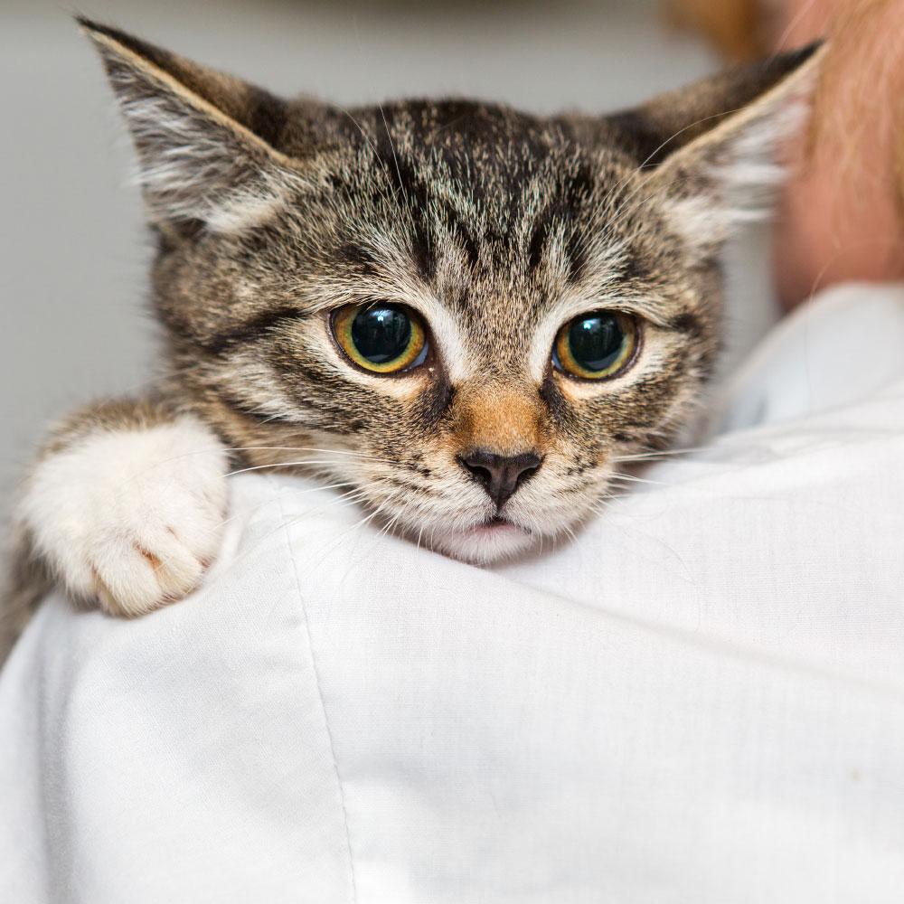 ANIMAL HOUSE HOSPITAL - ADOPTION - CATS FOR ADOPTION