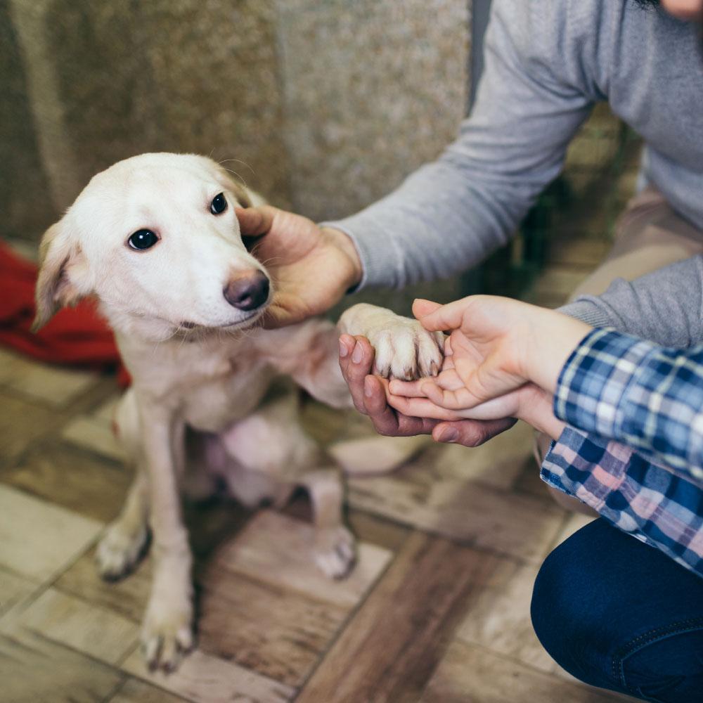 ANIMAL HOUSE HOSPITAL- ADOPTION - DOGS FOR ADOPTION