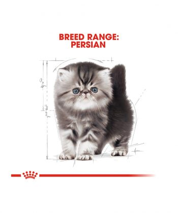 ANIMAL HOUSE HOSPITAL - PRODUCTS CATS ROYAL CANIN KITTEN PERSIAN 2KG GALLERY