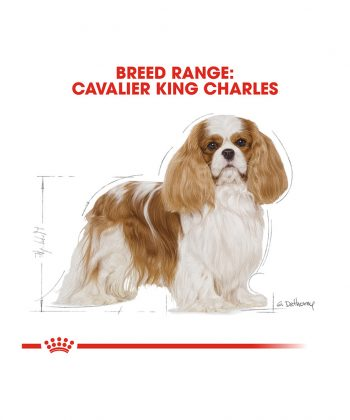 ANIMAL HOUSE HOSPITAL - PRODUCTS ROYAL CANIN CAVALIER KING CHARLES ADULT 1.5KG GALLERY