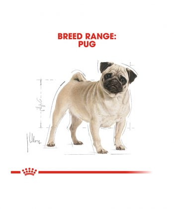 ANIMAL HOUSE HOSPITAL - PRODUCTS ROYAL CANIN PUG ADULT 1.5KG GALLERY