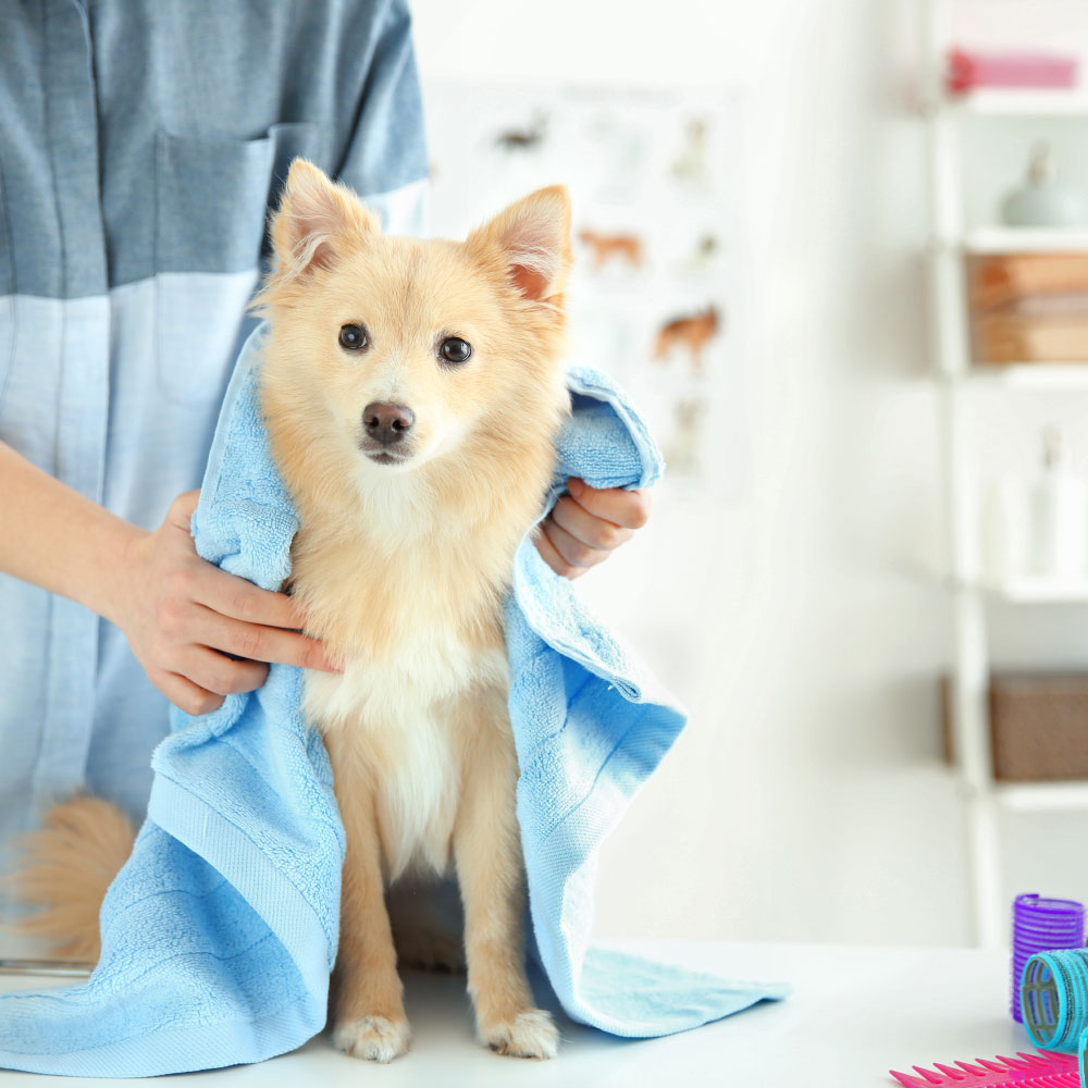 ANIMAL HOUSE HOSPITAL - VETERINARY HOSPITAL GROOMING