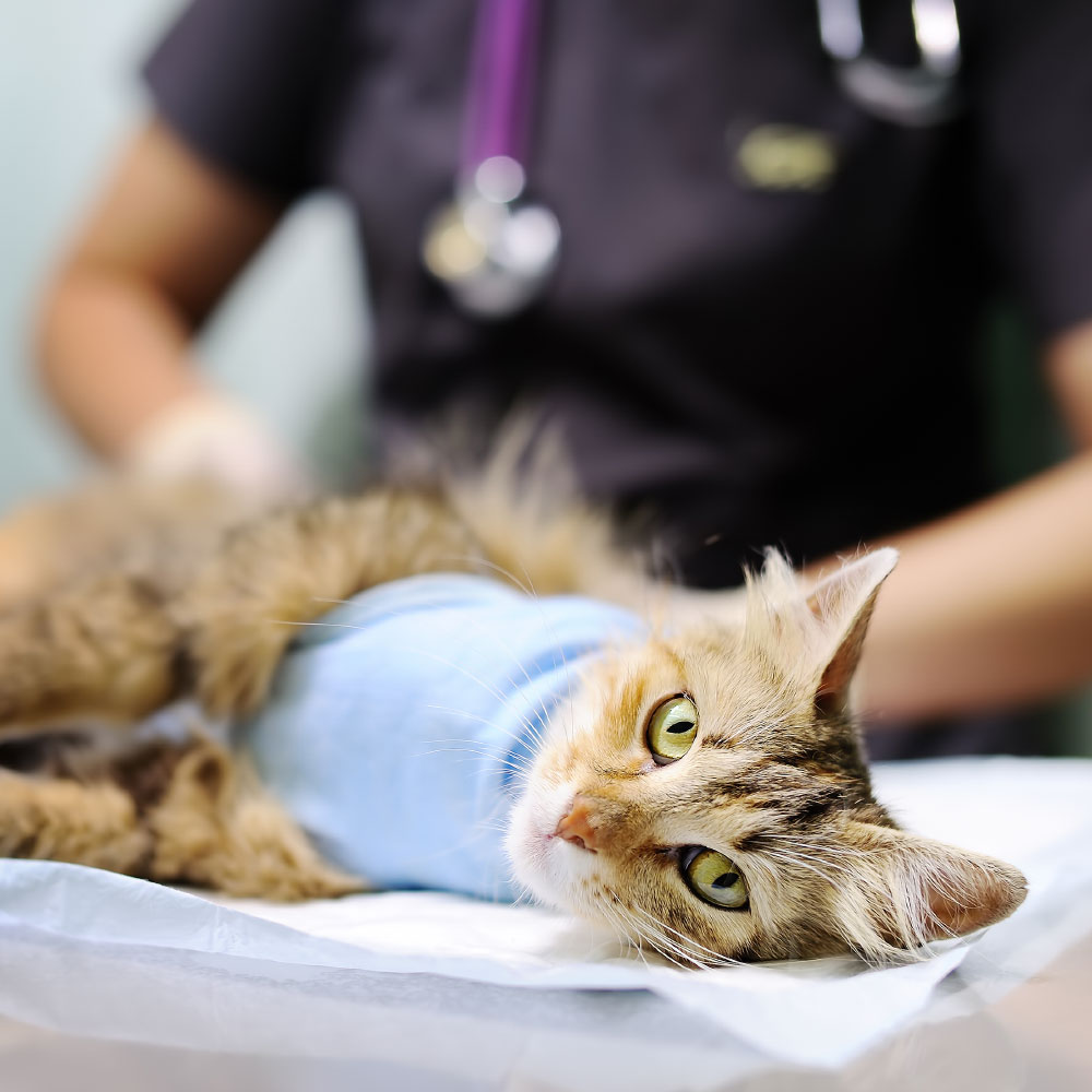 ANIMAL HOUSE HOSPITAL - VETERINARY HOSPITAL SPECIALIZED SERVICES